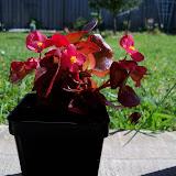 Gardening 2010 - 101_1333.JPG