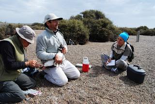 Biologistes_et_pingouins_10