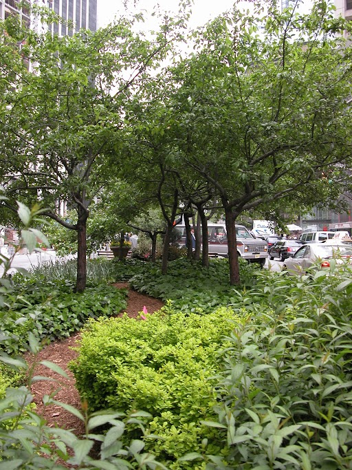 A path through crabapple trees in the The Lincoln Square Business Improvement District.