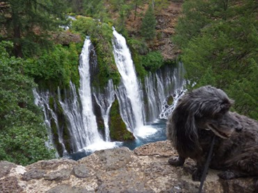 Skruffy at Burney Falls
