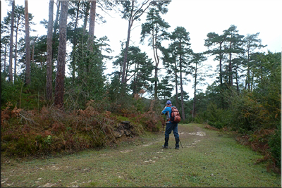 Camino herboso