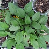 Gardening 2010 - 101_1091.JPG