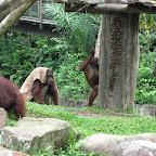 Monkeys at Singapore Zoo