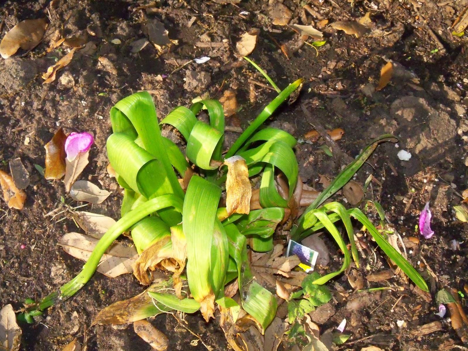 Gardening 2015 - 116_7658.JPG