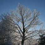tn_lachaux-2010-12-33.jpg