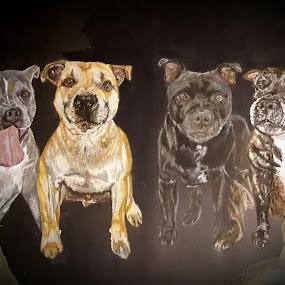 Four wee staffies by Lyndsay Hepburn - Drawing All Drawing ( 4staffies, brindlestaffie, blackstaffie, redstaffie, bluestaffie )