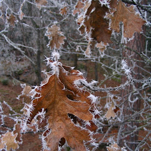 OR: Frosty December 12/6/05