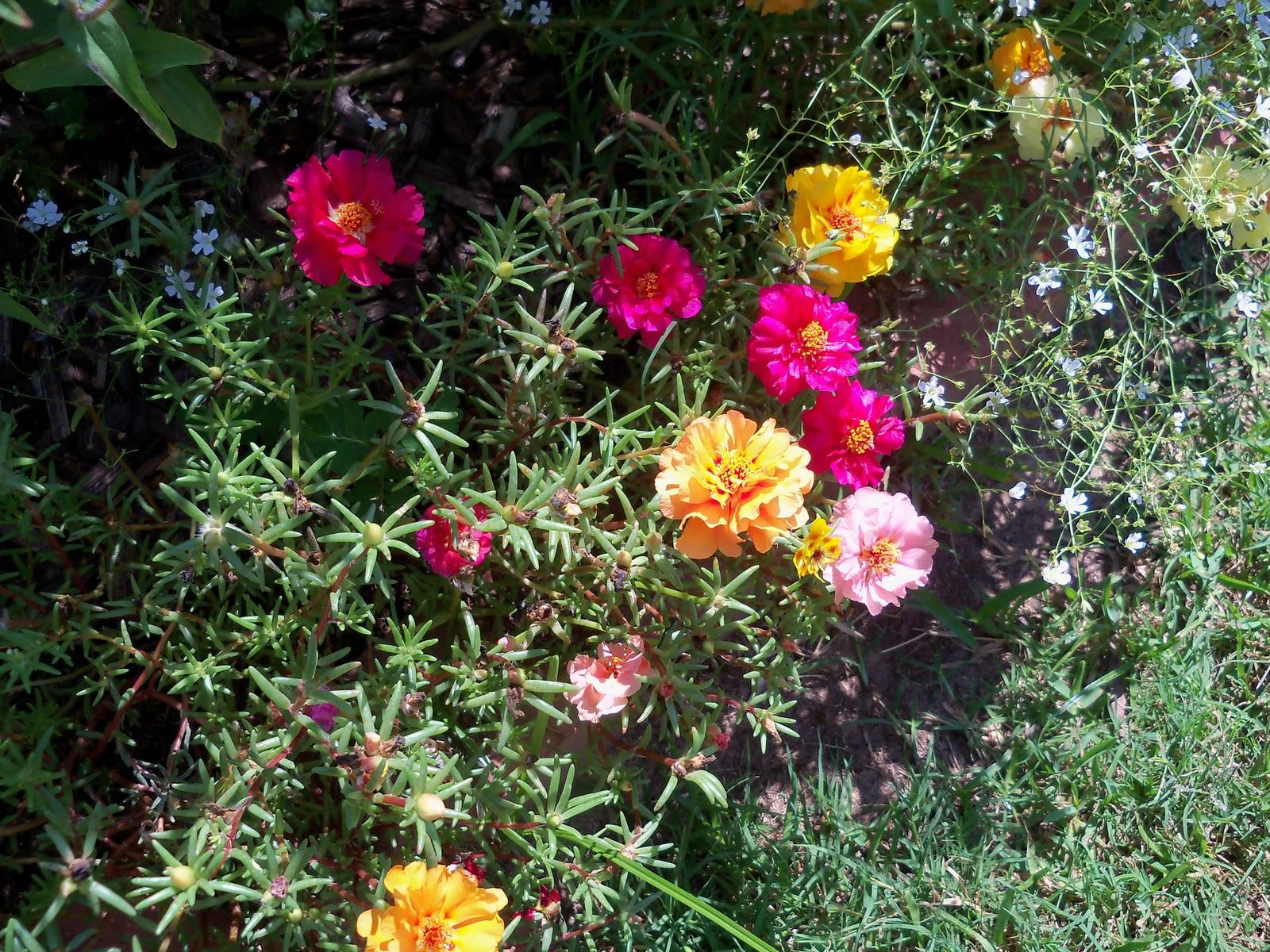 Gardening 2010, Part Three - 101_4289.JPG