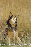Huisdierfotografie - Afscheid van een hond (27 oktober 2007) - 2