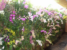 Emirates 2011  murs vegetal sur Dubai