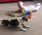 Dog teaches how to crawl