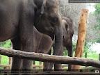 Elephant transit gallery