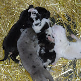 Cheyenne's babies at 1 week