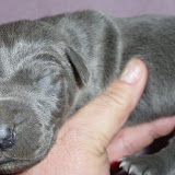 Blue girl w/ white strip on chest @ 1 week/Beverlin??