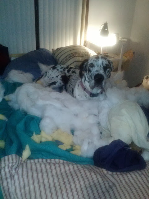 Mom. the pillow just exploded! I swear...
