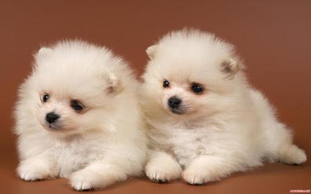 40 hình ảnh cún con siêu dễ thương ngộ nghĩnh
