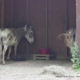 05-11-12 Wildlife Prairie State Park IL - IMGP1623.JPG