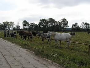 Photo: BA010186 Janow Podlaski - stadnina koni
