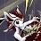 Nova Fang's profile photo