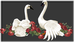 cisnes-buscoimagenes-24_thumb