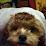 Brenda Dershem's profile photo