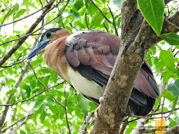 Bird Close Up at Olango Island Wildlife Sanctuary in Cebu