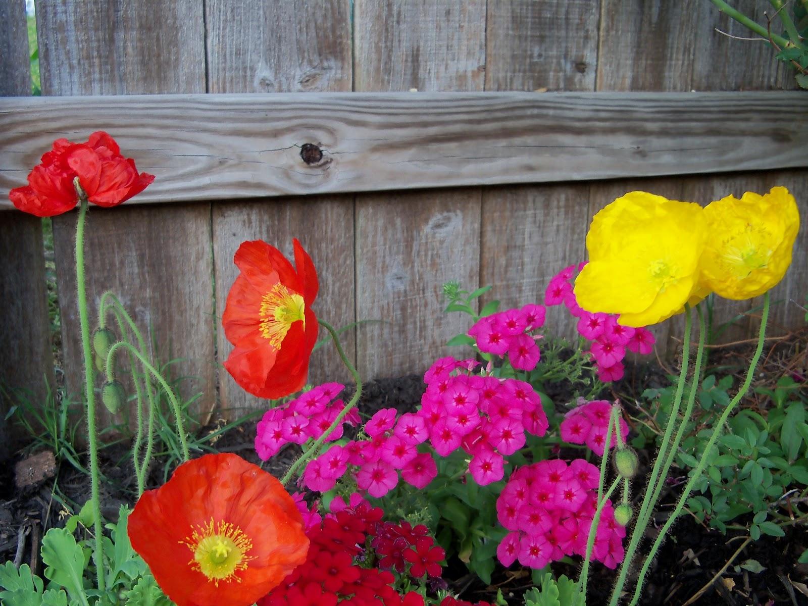Gardening 2011 - 100_7115.JPG