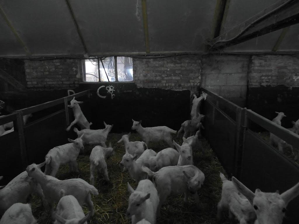 Bevers en Welpen- Lammetjes kijken - SAM_2389.JPG