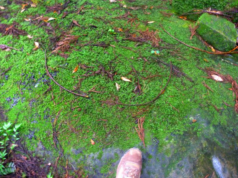 Petite randonnée au sud de Taufen, dans la région de Miaoli - P1330638.JPG