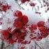 2 грудня – День Авдія: прикмети та чого не можна робити