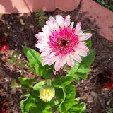Gardening 2010 - 101_1002.JPG