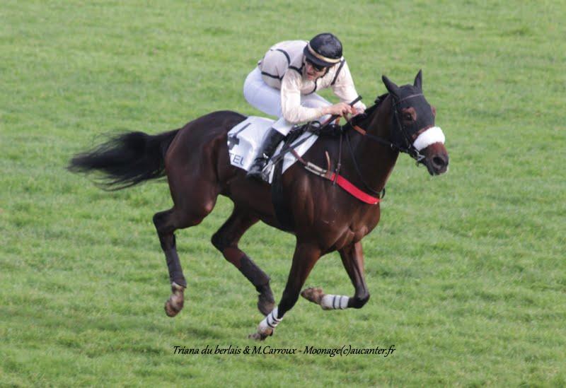 Photos Auteuil 7-11-2015 (48h de l'obstacle) IMG_6281