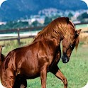 Horse Stallion HD pictures icon