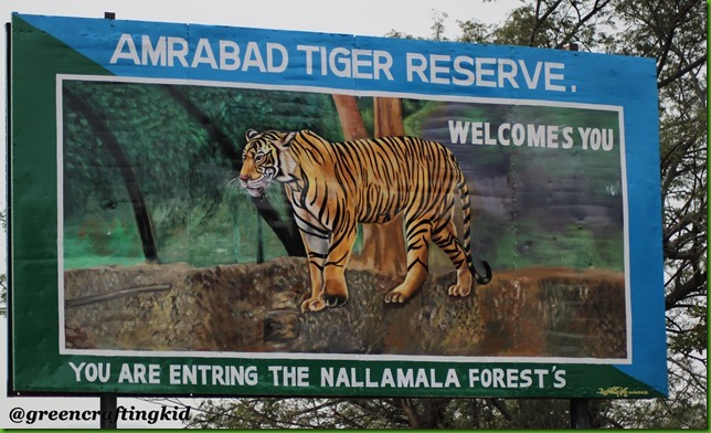 Welcome to Nallamalla forest