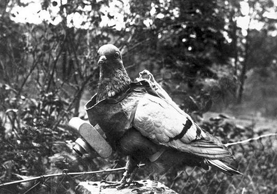 neubronner-pigeon-photography-14