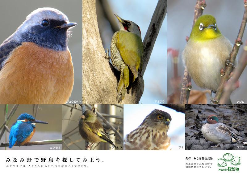 八王子みなみ野駅構内掲示板のポスター