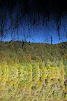LA TETE EN BAS   Reflets sur un lac à l'automne
