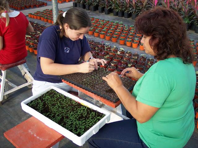 Alumnos repicando plantines de copete.