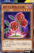 返り咲く薔薇の大輪