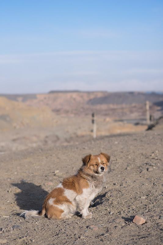 180103 坑口站の駅犬