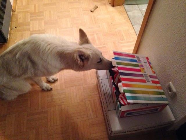 blogger-image-1492452976 %Hundeblog