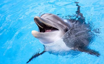 Το μεγαλύτερο δελφίνι που καταγράφηκε ποτέ στην ιστορία με μήκος που άγγιζε σχεδόν τα 7 μέτρα