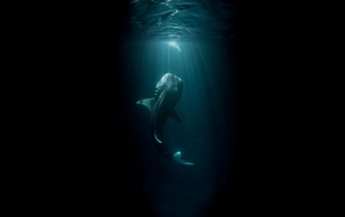 Imagens que o farão pensar duas vezes antes de entrar na água 09