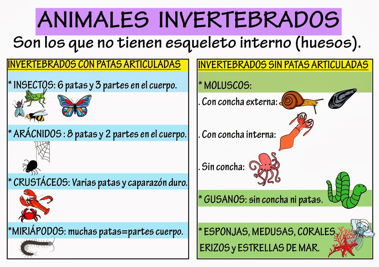 El casillero de Mila: Aprender sobre animales vertebrados e ...