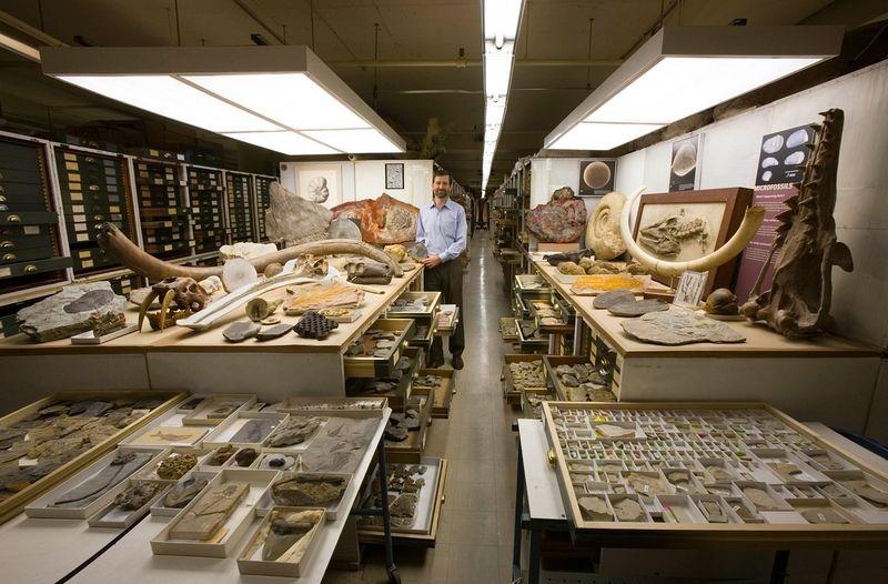 di storia naturale-museo-collezione-10
