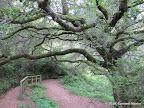 Hazelnut Trail, close to San Pedro Valley Visitor Center.
