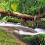 rainforeststream.jpg