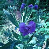 Gardening 2013 - IMG_20130318_162935.jpg