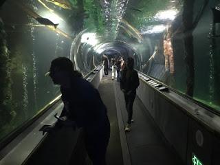 En glasstunell under vann for fisker svømmer over menneskene som går gjennom.