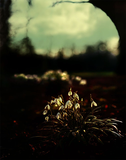 English Landscape with Snowdrops, photograph by Tim Irving